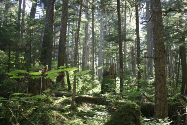 Alaska - The Bushman
