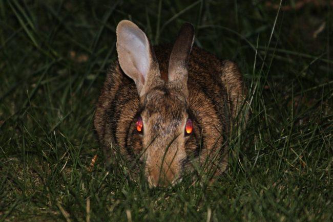Nebraska - Spooky (Explosive) Bunnies