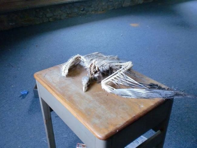 Sadly, attics can also be a final resting place for small animals like this unfortunate bird.