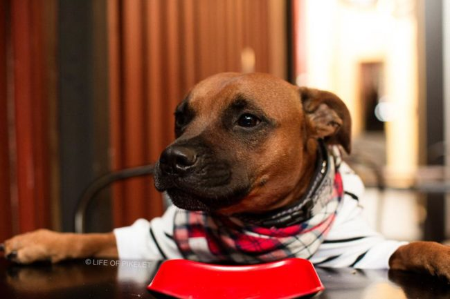 Aside from being totally stylish, the four-legged Good Samaritan loves helping out his buddies who are less fortunate -- particularly those who get a bad rap just for being bull breeds!