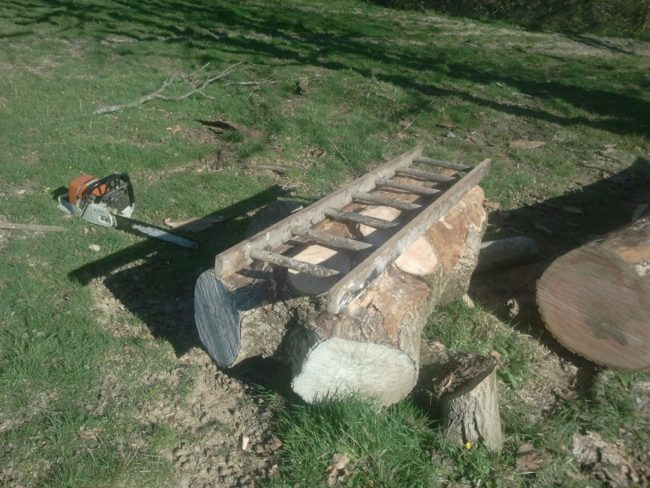 But first, let's start from the beginning. This was the huge log that bongodrummer had just hanging out in his field.