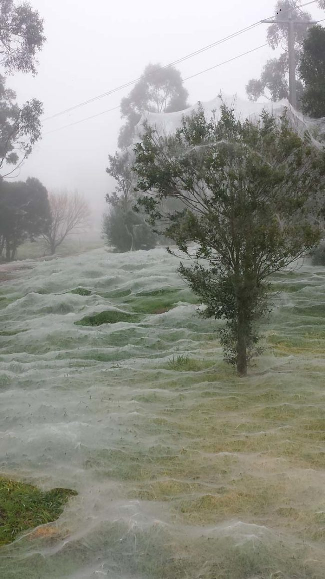 While all of that might be fascinating, it doesn't take away from the general creepiness of having everything covered in spider webs like this.