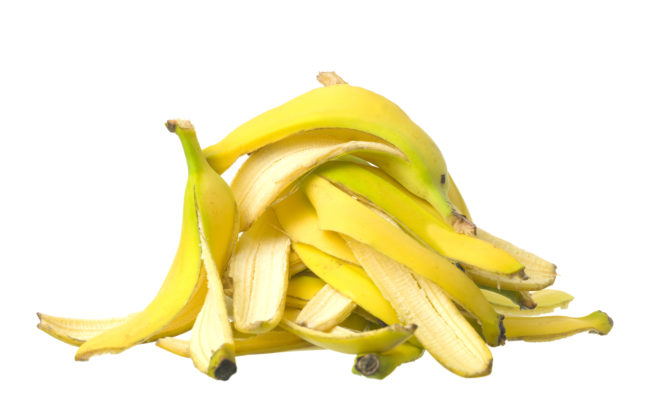 Banana peels are the perfect fertilizer to help your rosebushes grow.