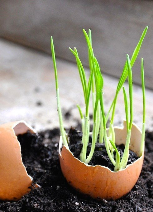 Start out your seedlings in used egg shells for a perfect biodegradable pot.