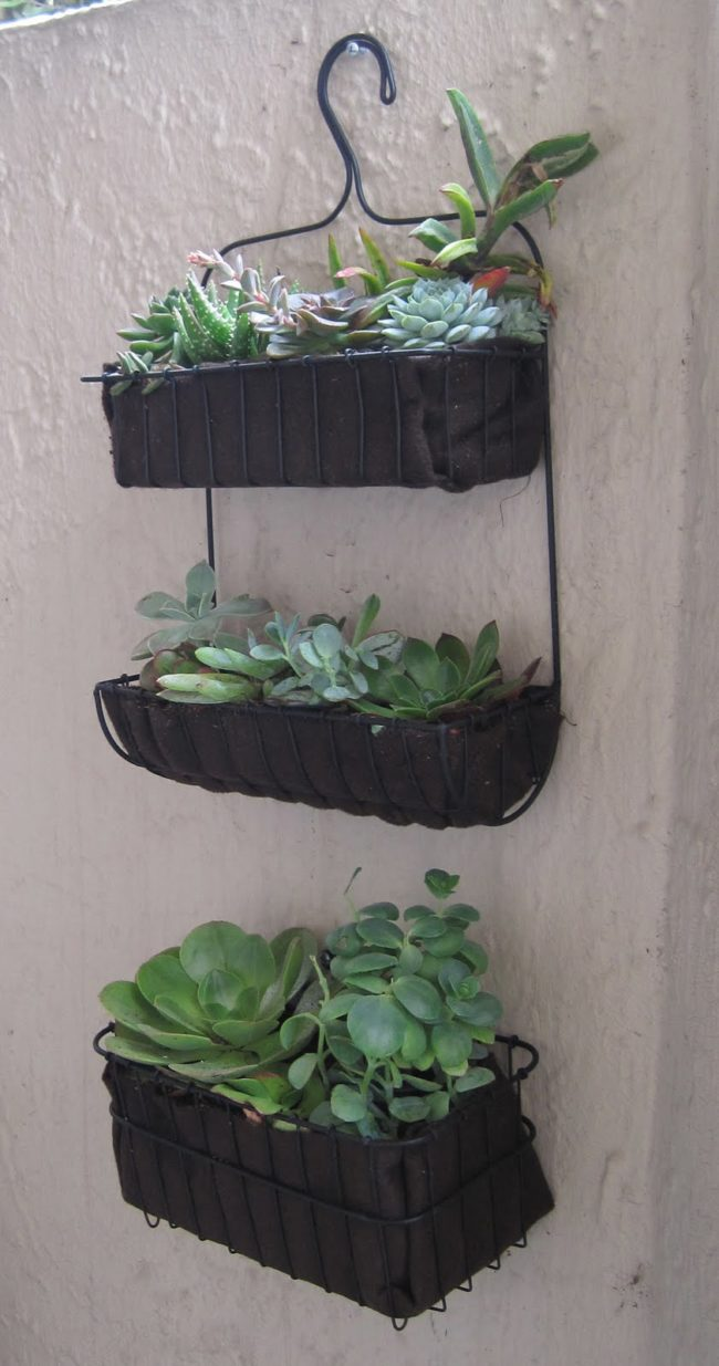 Have an old shower caddy hanging around? Transform it into a vertical garden.
