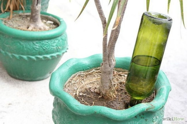 """Never forget to water your plants again with this <a href=""""http://www.wikihow.com/Make-Wine-Bottle-Plant-Waterer"""" target=""""_blank"""">automatic waterer.</a>"""