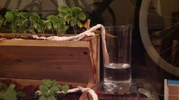 Water your houseplants with just a glass of water and a paper towel.