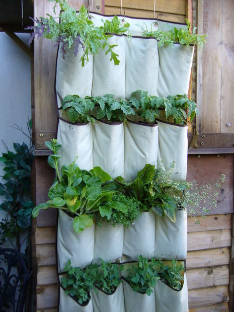 """Create this awesome hanging garden with a <a href=""""http://www.instructables.com/id/VERTICAL-VEGETABLES-quotGrow-upquot-in-a-smal/"""" target=""""_blank"""">shoe organizer</a>."""