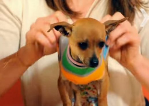 "Craft a <a href=""https://www.youtube.com/watch?v=H4adFCRoUQM"" target=""_blank"">warm sweater</a> for your little pooch and let the cuteness wash over you."