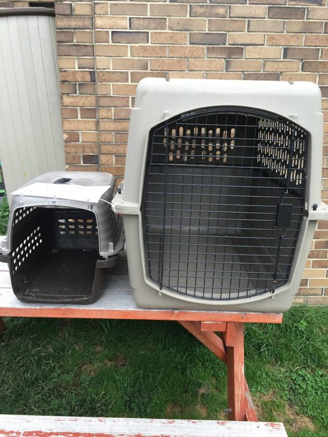 The crate on the right is the proper size for her 60-pound frame, but she was cruelly left inside the other tiny box and abandoned outside of the shelter.