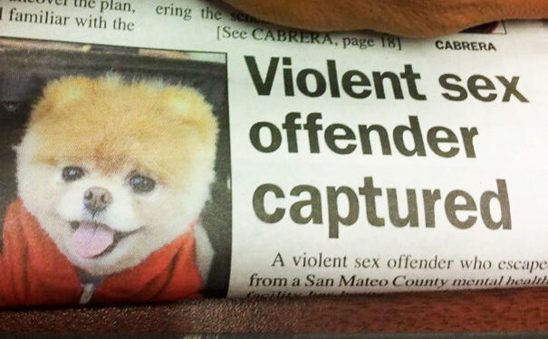 I bet they sent in the dog catcher to capture him.