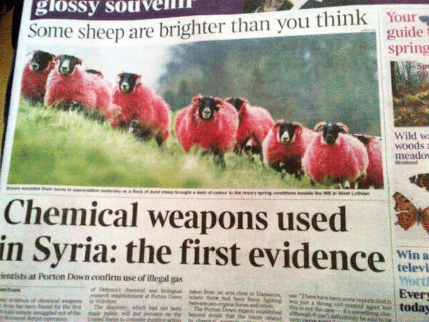 No sheep were harmed as a result of their chemical testing.