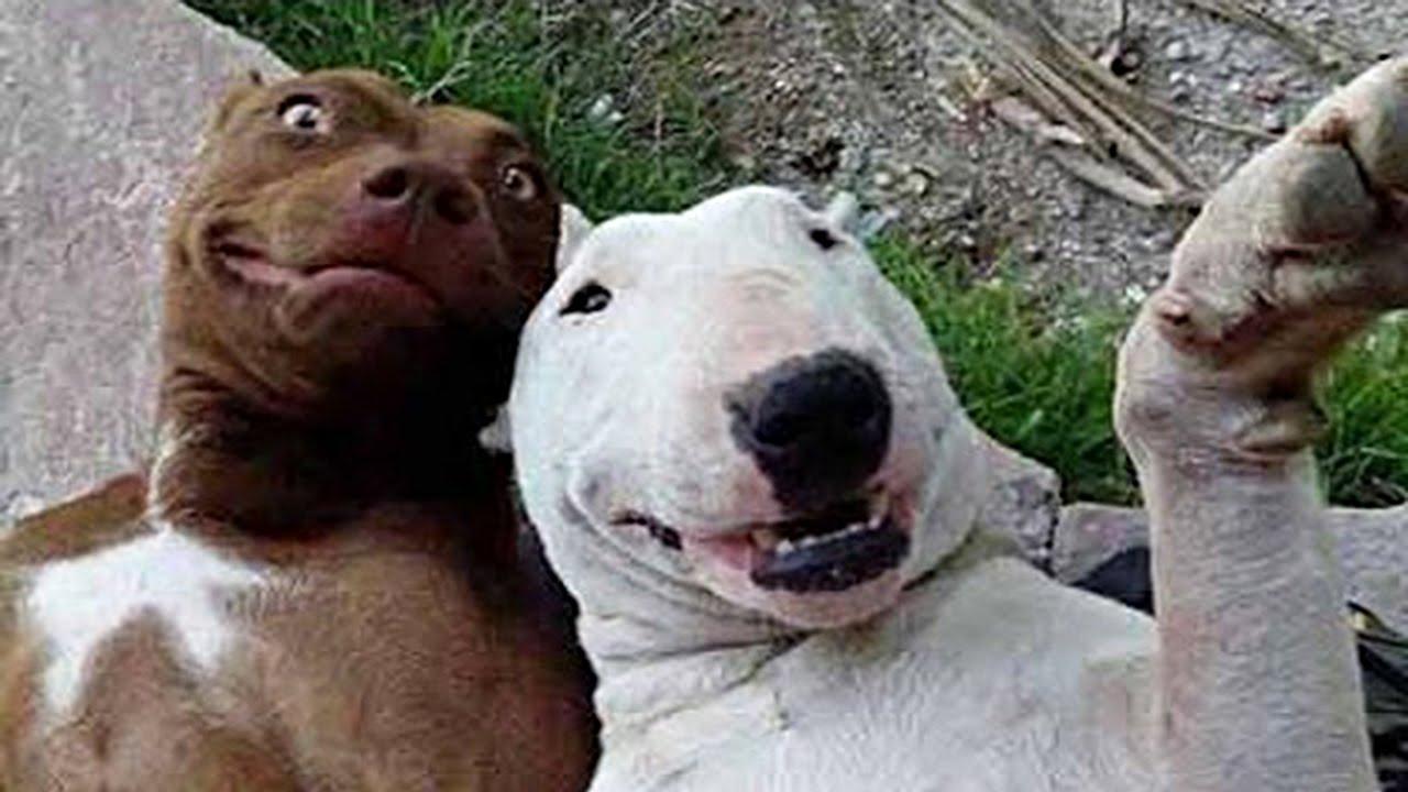 Image of: Animals Funny Animals Compilation Funny Cats Funny Dogs Animals Fails Funny Videos Funny Stories On The Net funnymodocom Funnymodocom Funny Animals Compilation Funny Cats Funny Dogs Animals Fails