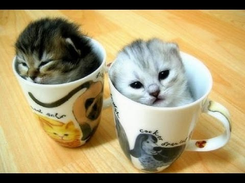 Cute Cats Doing Funny Things Cute Cats Compilation Funny