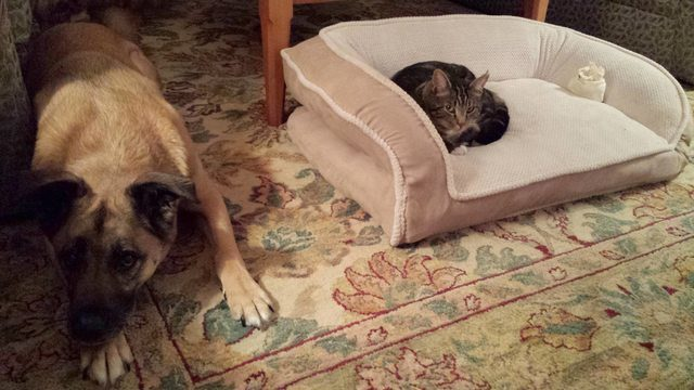 I hate to break it to you, buddy, but you're never getting that bed back.
