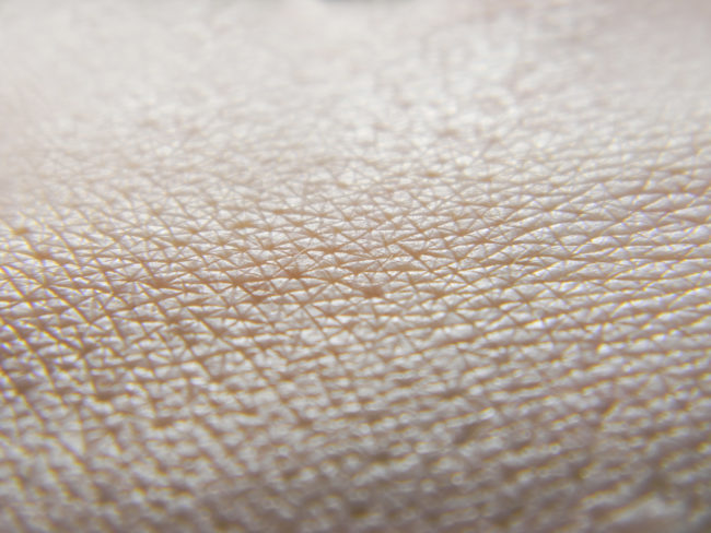 Human skin is made up of several layers of collagen, and these layers serve as padding against blunt-force trauma.