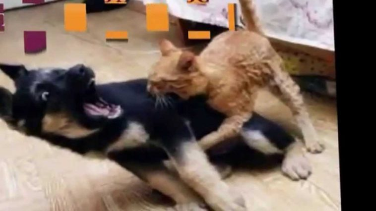 Funny Cats - Funny Videos That Will Make You Laugh So Hard ... - photo#12