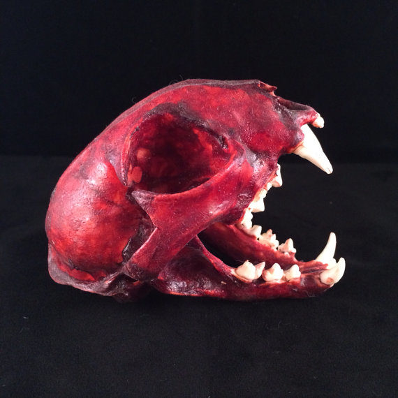 "I've always wanted my own <a href=""https://www.etsy.com/listing/181660149/real-bobcat-skull-skinned?ga_order=most_relevant&amp;ga_search_type=all&amp;ga_view_type=gallery&amp;ga_search_query=real%20cat%20skull&amp;ref=sr_gallery_3"" target=""_blank"">real bobcat skull</a>!"
