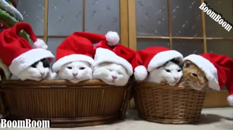 funny videos we wish you a merry christmas funny cats and dogs videos merry christmas 2016 - Merry Christmas Funny