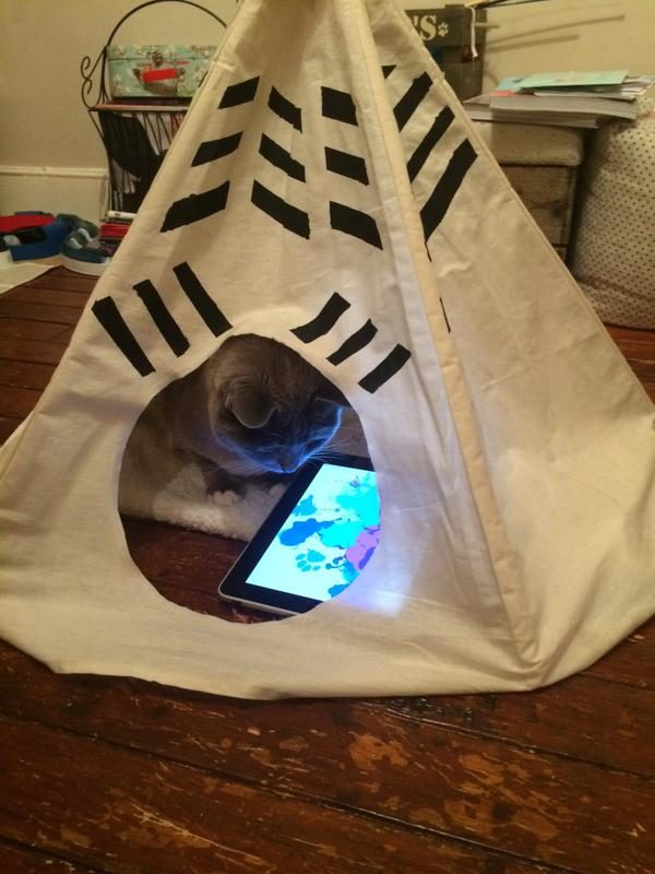"""""""Sometimes I wonder if I spoil the cat, seeing him with his iPad, in his yurt."""""""