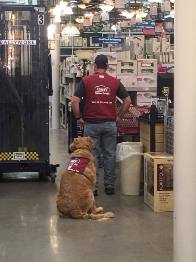 Fortunately, the answer was a resounding yes! Lowe's hired Luthy <em>and </em>Charlotte, and outfitted them both with classic red work vests. On December 4, the pair went viral on social media after a customer posted the picture below.
