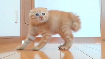 Scared Cats The Best Funny Cats Jumping Videos Compilation ...