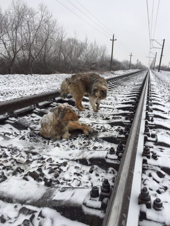 They stayed like this for two days before Denis Malafeyev found them.  He had gotten a call from a friend who saw them, and he wanted to help.  But he was horrified when he noticed a train speeding towards them.