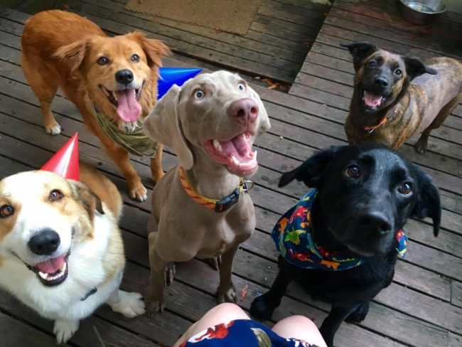 Let's kick things off with a dog birthday party! So many happy faces.