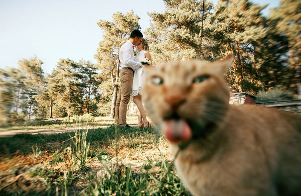 Funny Cat Photobombs