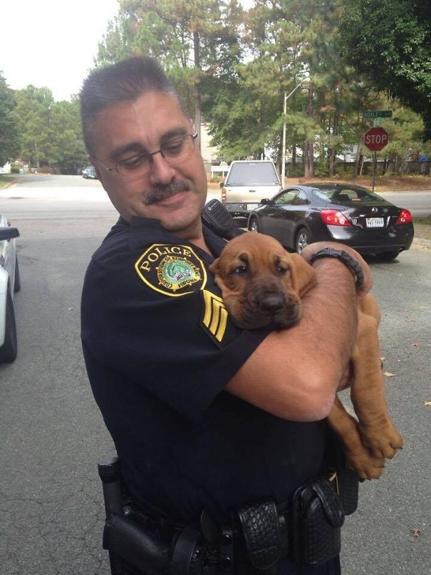 My Local PD Just Got A New Puppy Who Is So Ready To Be Done With Pictures And Just Take A Nap