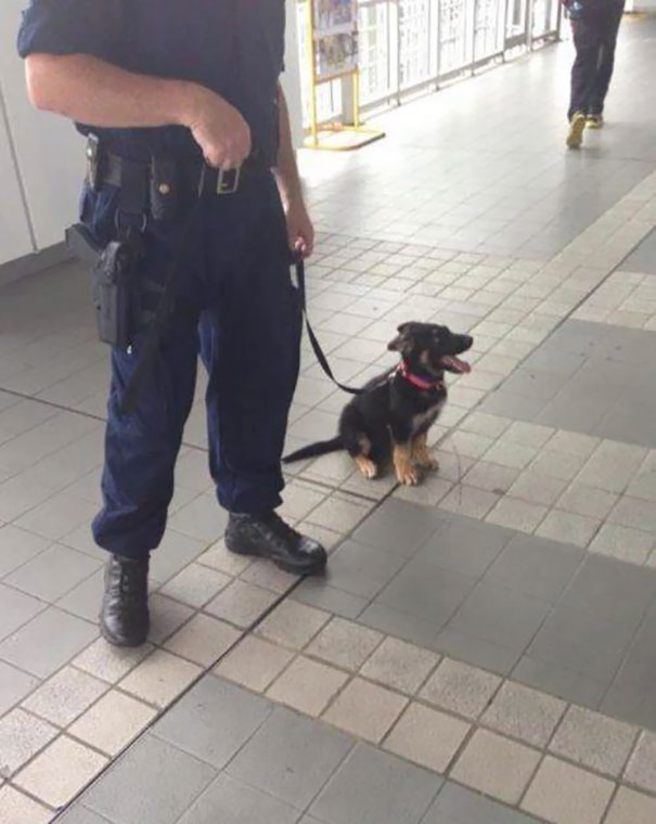 One Day, I'll Be A Big Police Dog