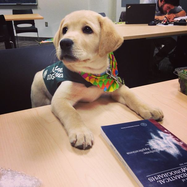 Learning How To Read Is Part Of A Training