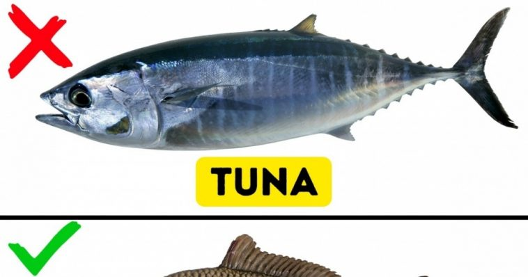 9 kinds of fish you shouldn�t eat � funny stories on the